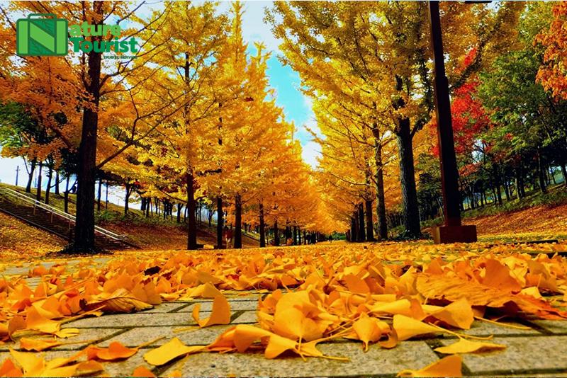 Thời tiết Hàn Quốc luôn trong xanh, mát mẻ và không khí đặc biệt dễ chịu